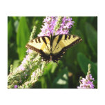 Swallowtail Butterfly on Purple Wildflowers Canvas Print