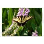 Swallowtail Butterfly on Purple Wildflowers Card