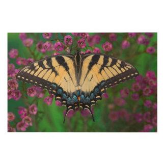 Swallowtail Butterfly on purple Wood Print