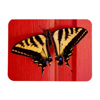 swallowtail butterfly on red premium magnet