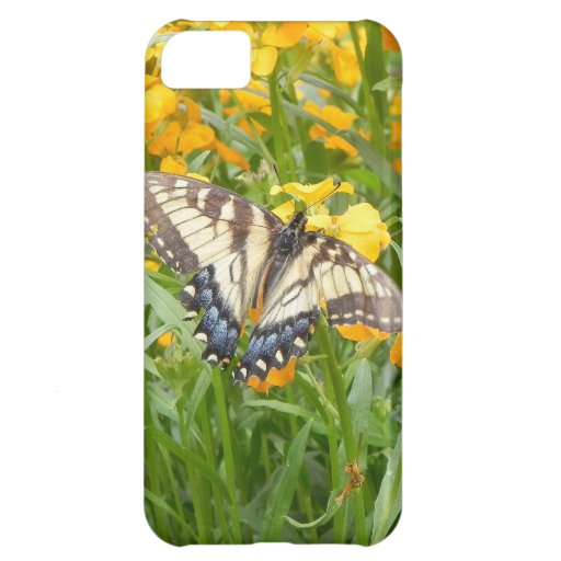 Swallowtail Butterfly  on Siberian Wallflowers iPhone 5C Covers