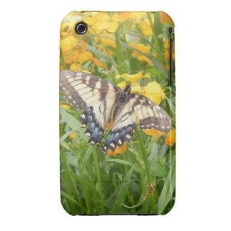 Swallowtail Butterfly  on Siberian Wallflowers iPhone 3 Covers