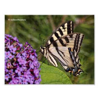 Swallowtail Butterfly on the Butterfly Bush Photo Print
