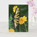 Swallowtail Butterfly on Yellow Cosmos Flower Card
