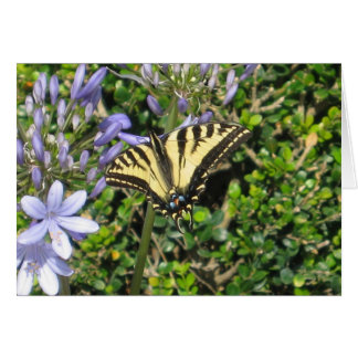 Swallowtail butterfly photography notecard