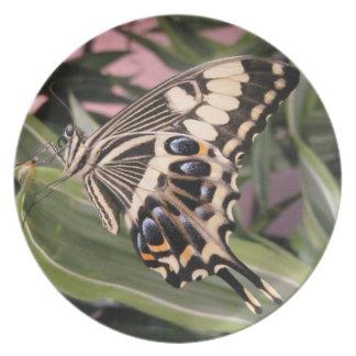Swallowtail Butterfly Plate