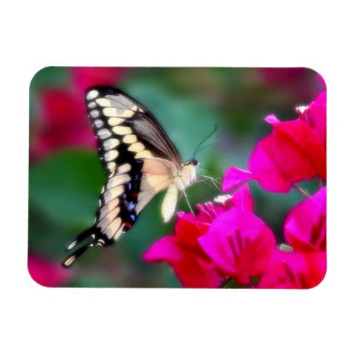 Swallowtail Butterfly Rectangular Photo Magnet