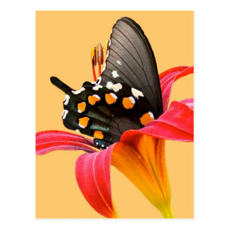 Swallowtail Butterfly, Red Lily Gifts and Cards