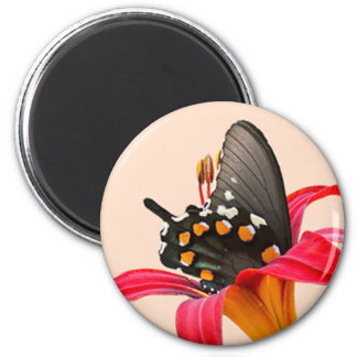 Swallowtail Butterfly, Red Lily Gifts and Cards Magnet
