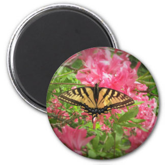 Swallowtail Butterfly Sits on Pink Azaleas Magnet