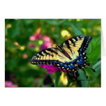 Swallowtail butterfly stationery note card