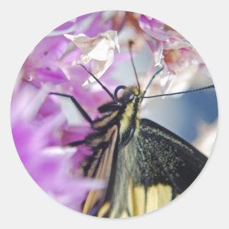 Swallowtail butterfly - Sticker