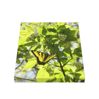 Swallowtail butterfly Stretched Canvas Print
