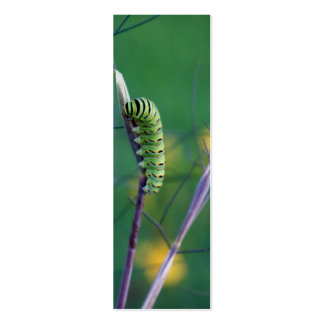 Swallowtail Cat Science Bookmark Business Card