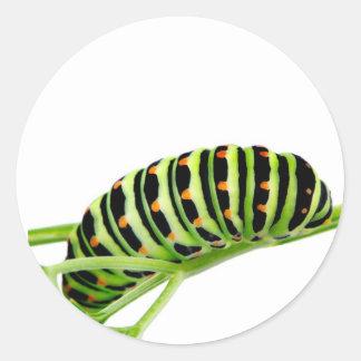 Swallowtail caterpillar classic round sticker