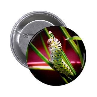 Swallowtail Caterpillar Pins