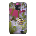 Swallowtail Caterpillar Samsung Galaxy SII Cases