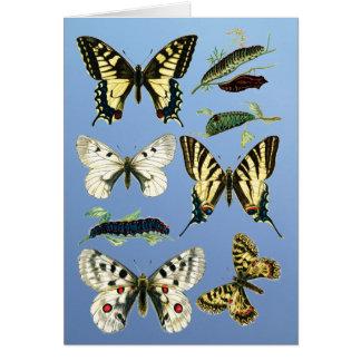 Swallowtail Caterpillars, Butterflies and Moths Card