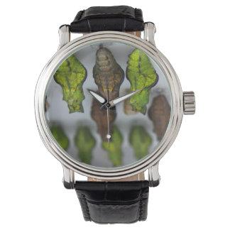 Swallowtail Chrysalises Reloj De Mano