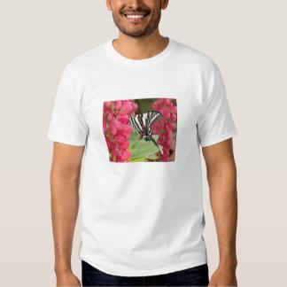 swallowtail de la cebra camisas