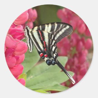 swallowtail de la cebra pegatina redonda