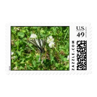 swallowtail de la cebra sello