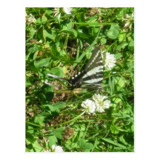 swallowtail de la cebra postal