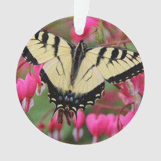 Swallowtail del este