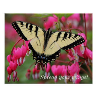 Swallowtail del este póster