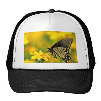 Swallowtail del tigre en coreopsis de la Lanza-hoj Gorra