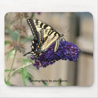 swallowtail del tigre mousepad