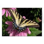 Swallowtail en Echinacea Tarjeta