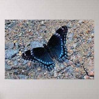 Swallowtail en el camino de la grava poster