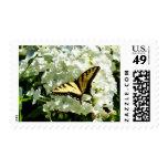 Swallowtail en el Hydrangea blanco Envio