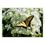 Swallowtail en el Hydrangea blanco Felicitación