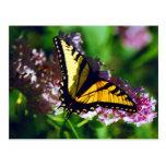 Swallowtail en la postal de la lila