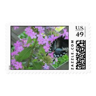 swallowtail en phlox sellos