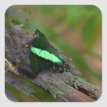 Swallowtail esmeralda colcomanias cuadradases