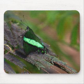 Swallowtail esmeralda alfombrilla de ratón