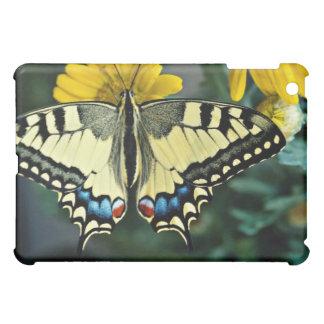 Swallowtail, flores del machaon de Papilio