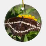 Swallowtail gigante adorno