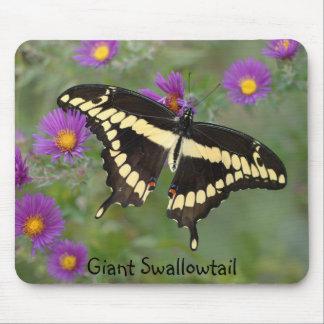 Swallowtail gigante en asteres alfombrillas de ratón