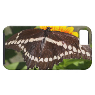 Swallowtail gigante iPhone 5 carcasa