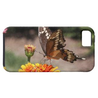 Swallowtail gigante iPhone 5 cárcasas
