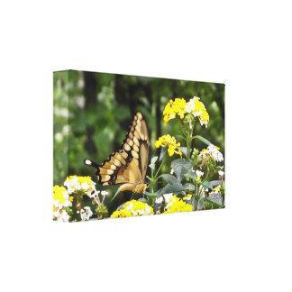 Swallowtail gigante lona envuelta para galerias