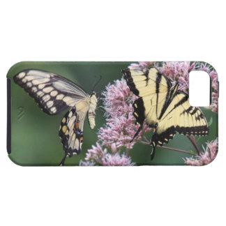 Swallowtail gigante y tigre del este Swallowtail iPhone 5 Case-Mate Protector
