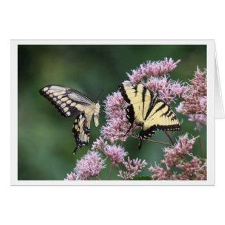 Swallowtail gigante y tigre del este Swallowtail Tarjeta De Felicitación