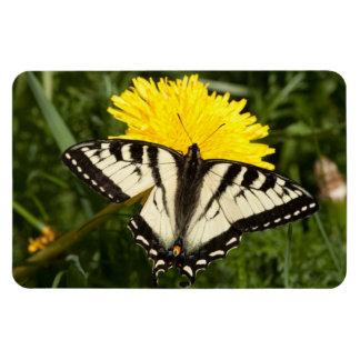 Swallowtail hecho andrajos iman rectangular