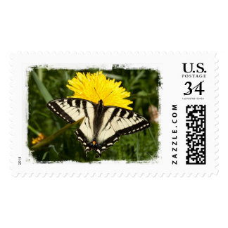 Swallowtail hecho andrajos sellos postales