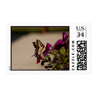 Swallowtail in the Petunias Postage Stamp